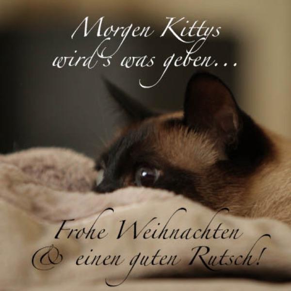 Kunstpostkarte Motiv 11 Morgen Kittys