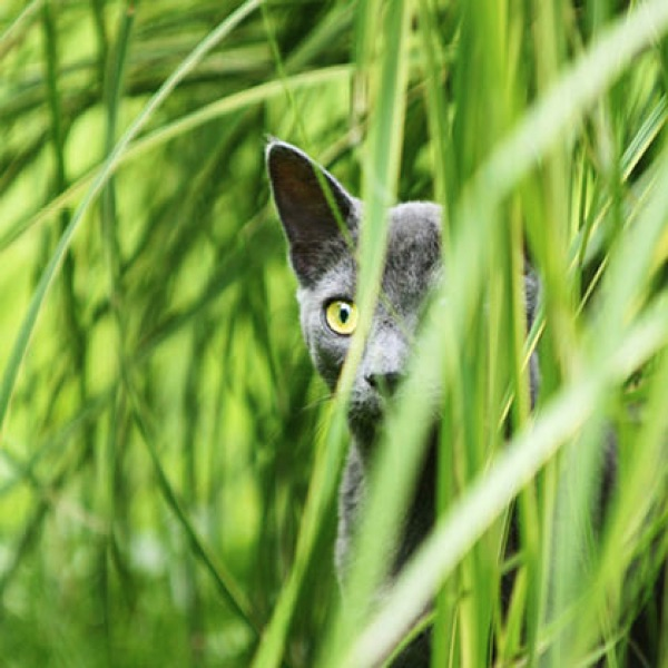 Kunstpostkarte Motiv 3 Katze im Gras