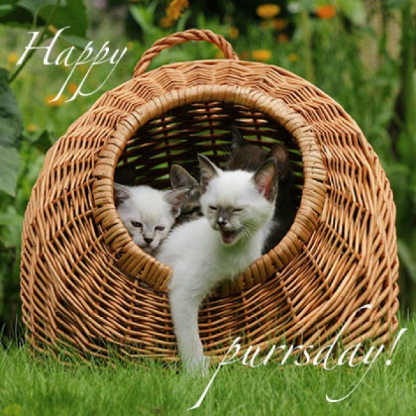 Kunstpostkarte Motiv 5 happy purrsday