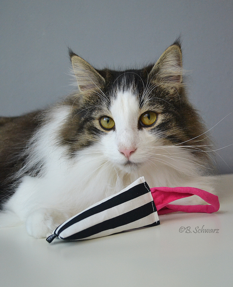 nip kick catnip spielzeug purrmania manufaktur f r artgerechtes katzenspielzeug. Black Bedroom Furniture Sets. Home Design Ideas