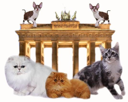 logenhaus_berlin_hp553ce9b725436