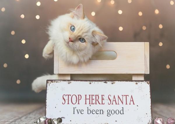 """Weihnachtskarte """"Stop here santa"""""""